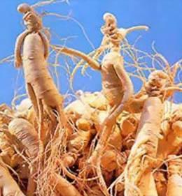 Травы-укрепляющие-иммунитет-женьшень-2
